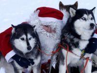 Новогодняя сказка в краю Джека Лондона и ездовых собак Хаски (для школьников)