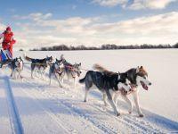 Новогодние приключения у Белого Клыка (для школьников)