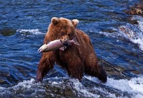 Медведи и другие 7 чудес Камчатки (10 дней + авиа)