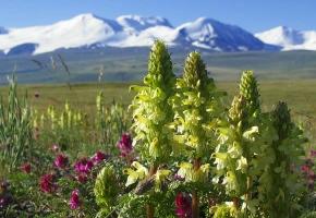 Алтайский кольцевой с посещением плато Укок (9 дней + авиа)
